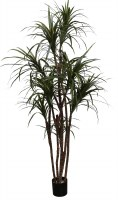 "60"" Potted Artificial Dracena Marginata Tree"