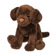 Finn - Labrador Chocolat