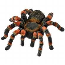 Tarantule Mygale