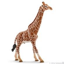 Girafe mâle