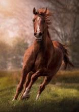 Casse-tête 1500 mcx - Le Cheval