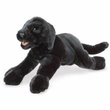 Chiot Labrador noir