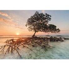 Casse-tête 1000 mcx - Red Mangrove