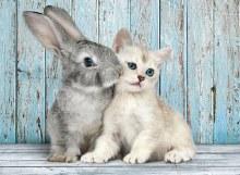 Casse-tête 500 mcx - Chat et lapin