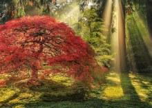 Casse-tête 1000 mcx - Magic Forest