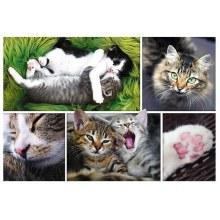 Casse-tête 1000 mcx - Montage de chats