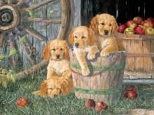 Casse-tête, 350 mcx - Puppy pail