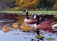 Casse-tête 1000 mcx - Platts Pond