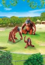 Famille d'orang-outangs