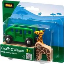 Girafe et wagon