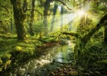 Casse-tête 1000 mcx - Esprit de la forêt
