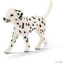 Dalmatien Male