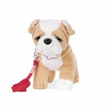 Chiot Bulldog