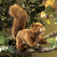 Écureuil rouge