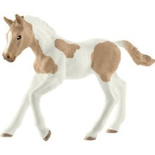 Cheval Foal