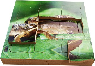 Life Cycle Of A Frog Puzzles