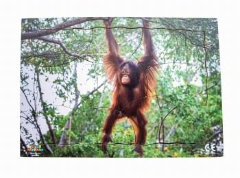 Endangered Animal Orangutan