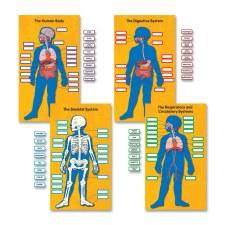 BB - Human Body