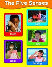 Poster Five Sences