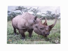 Endangered Animal Black Rino