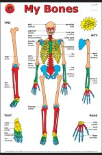 Poster - My Bones Large