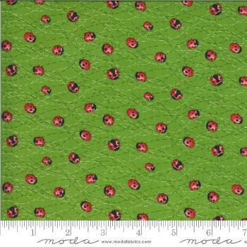 Solana Ladybug Sprout