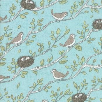 Nest Bird Nest Robin's Egg