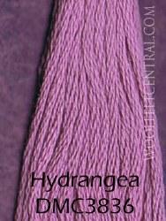 Floss Hydrangea