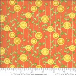 Solana Stalks Clementine