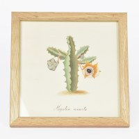 Kiss That Frog Mini Cacti - SQ004