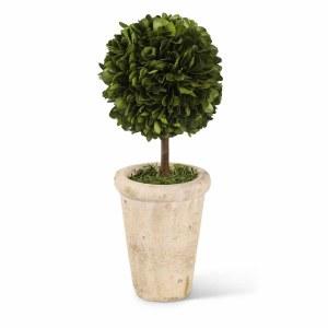 Mini Boxwood Topiary in Clay Pot
