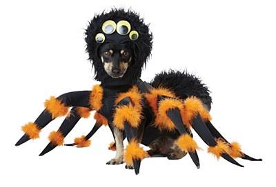 Spider Pup Pet Costume
