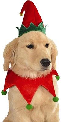 Elf Pet Costume Set