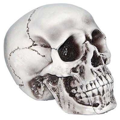 """Realistic 8"""" Foam Skull Prop"""