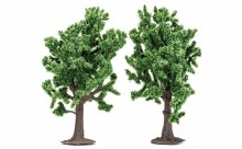 Beech Trees - R7204