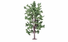 Lime Tree - R7210