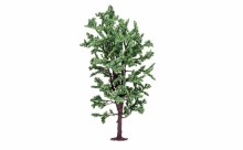 Horse Chestnut Tree - R7211