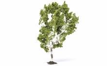 Birch Tree - R7215