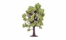 Beech Tree - R7219