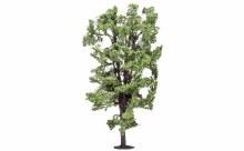 Horse-Chestnut Tree - R7222