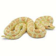 Albino Burmese Python - 100250