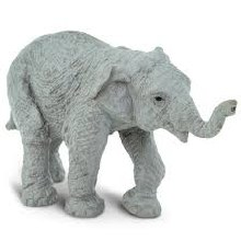 Asian Elephant Baby - 222329