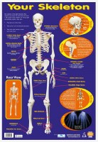 WALL CHART KNOW YOUR SKELETON