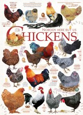 Cobble Hill 1000pc Chicken Quotes