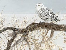 Cobble Hill 500pc Fallen Willow Snowy Owl