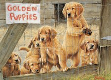 Cobble Hill 500pc Golden Puppies