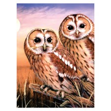 Paint By Number Tawny Owls