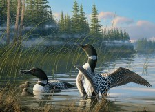 Cobble Hill 1000pc Common Loons