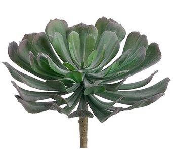 "Aeonium Pick, 6""- Green/Gray"