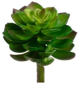 "Echeveria Pick, 8""- Green/Burgundy"